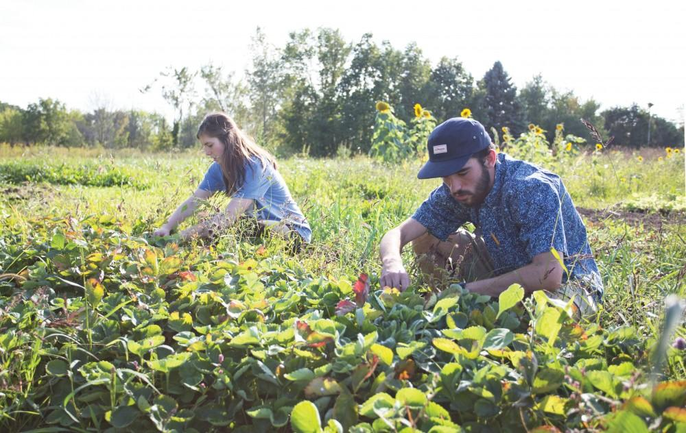 GVL/Kevin Sielaff - Austin VanDyke (right) and Skyla Snarski (left) work the fields on Tuesday, Sept. 15, 2015 at the Sustainable Agriculture Project.