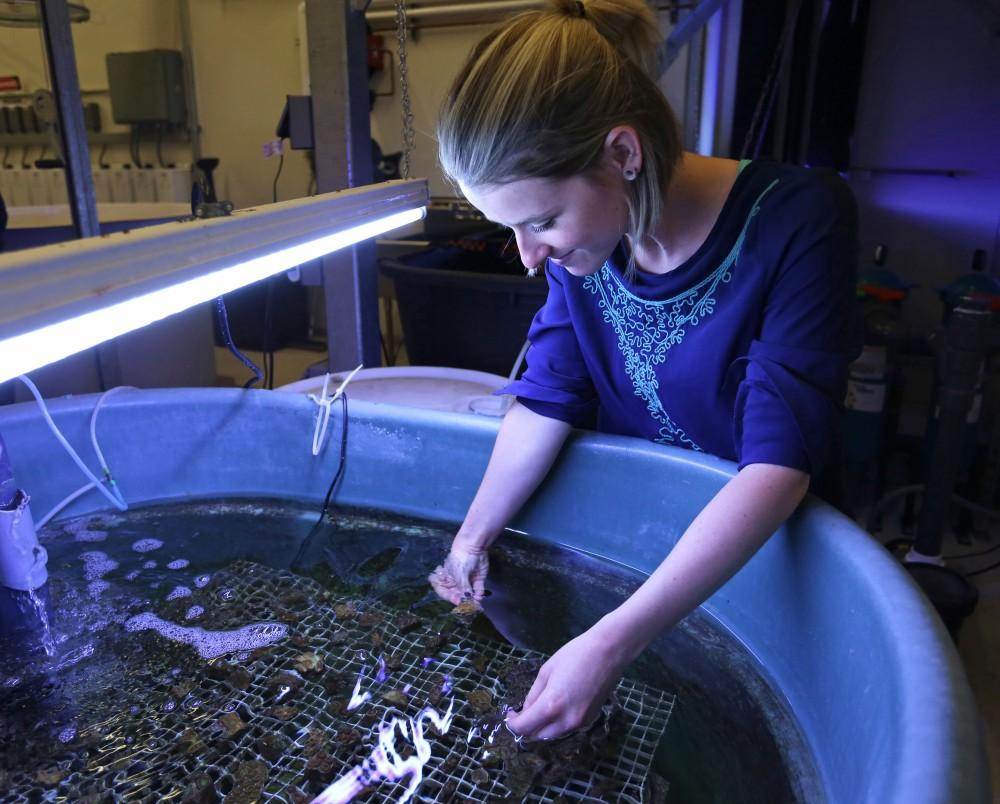 Emily Luke inspects coral specimens that have been growing in the lab within the Robert B. Annis Water Resource Institute (AWRI) in Muskegon on Wednesday, July 8, 2015. GVL / Archive