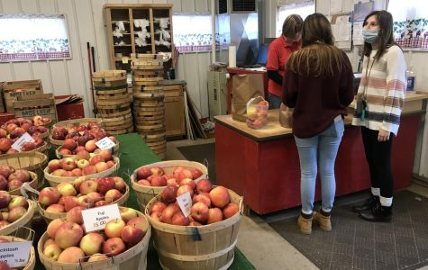 Apple picking is more popular than ever during the fall of 2020. (GVL / Autumn Pitchure)