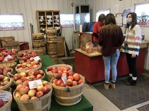 Apple picking is more popular than ever during the fall of 2020. (Courtesy / Michelle Wells)
