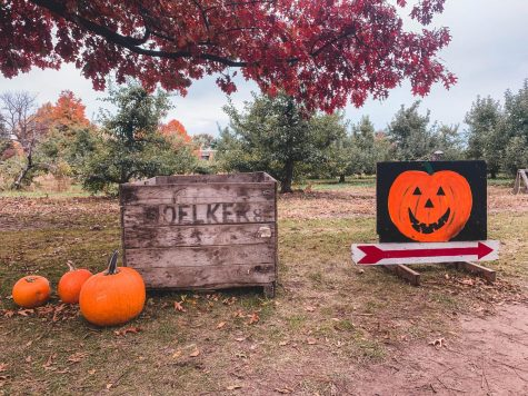 Where to pick your perfect pumpkin this fall