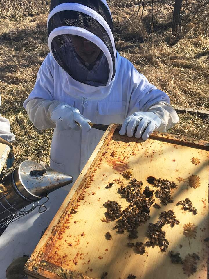 GVL / Courtesy - GVSU Beekeepers ClubBiomedical student Megan Damico works with bees at the Holland Meijer Campus Apiary on Friday, Feb. 17, 2017.