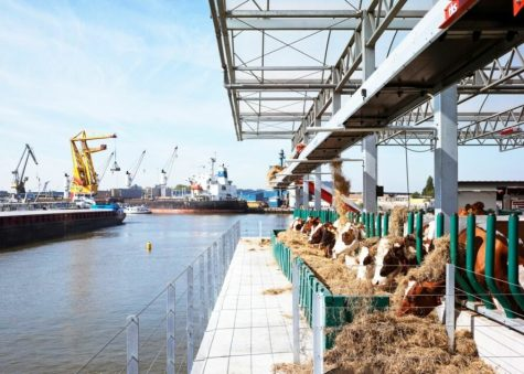Students tour floating dairy farm in Netherlands
